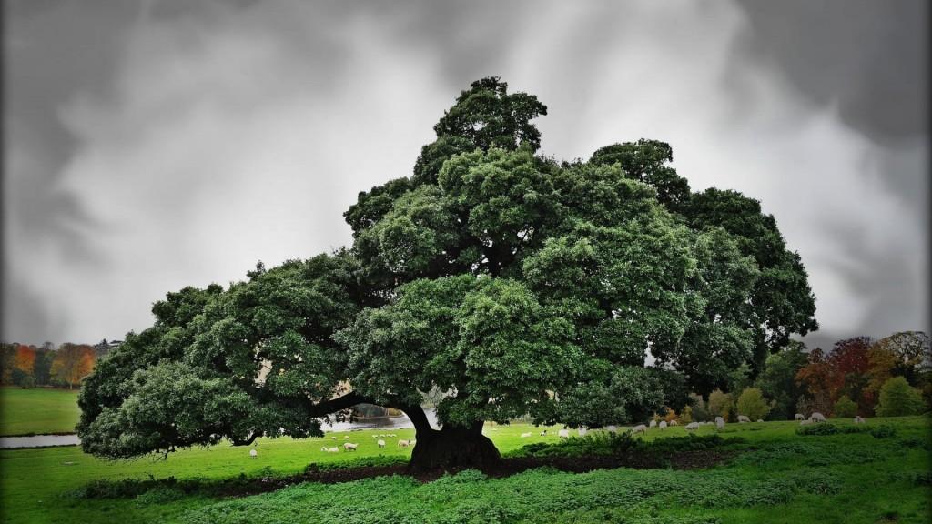 Lolololo Tree